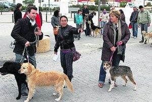 curso perros diario local
