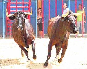 toros alcasser 2011